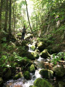 La marche en forêt est un exercice complet