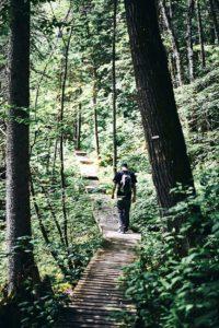 La marche en forêt rend heureux
